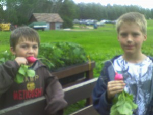 These boys sink their teeth into the freshest radishes around!