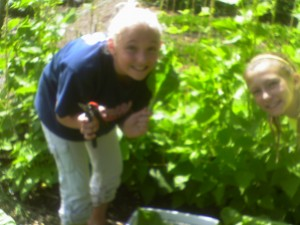 Campers enjoying their work project of harvesting Swiss Chard
