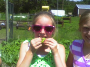 Kids and counselors alike marveled at how tasty fresh peas right off the vine are!